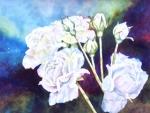 Thorpe, Alyson - 'Regal Roses'